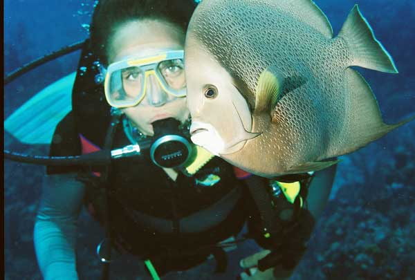 diver with angel fish in Cayman Islands
